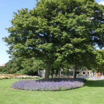Nepeta Als Boomspiegelbeplanting In Het Westbroekpark 2
